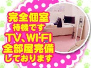 TV、WIFI完備の完全個室あります!